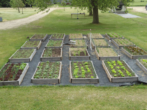 Raised Bed Gardening For Dragonflies And Me