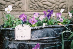 pansies in old canner_emailver