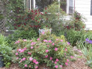 Banister Garden11 emailver
