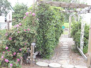pergola_walkway_rose_emailver2