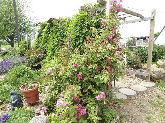 Plans To Build Pergola Designs Better Homes And Gardens