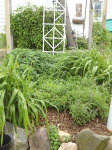 kitchen garden herbs 14 emailver 2012