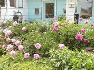 side garden12 emailver