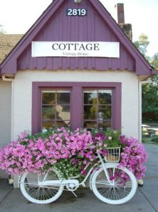 What a stunning display of petunias on a neat little shed.