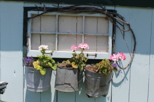 Buckets on the side of my potting shed