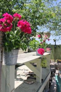 Three pots with geraniums atop my patios buffet